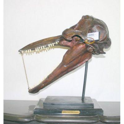 záhradní bronzová socha - Fosilni lebka delfina